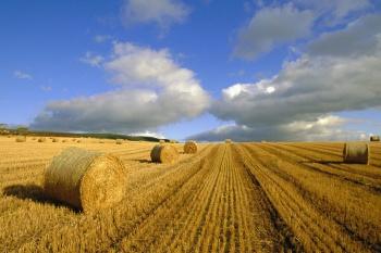 Можно ли продать землю сельскохозяйственного назначения государству?