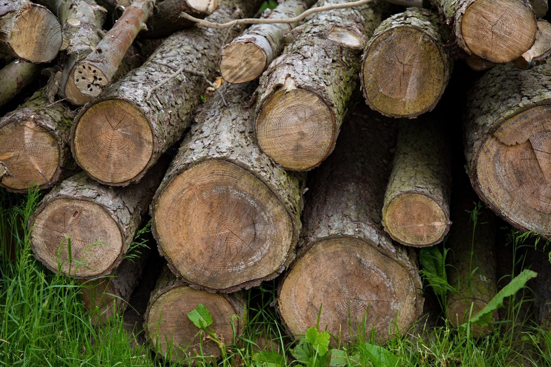 Уточнены отдельные акты Правительства РФ по вопросам рубки деревьев и кустарников