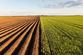 Определяем размер земельной доли на участке сельхозназначения