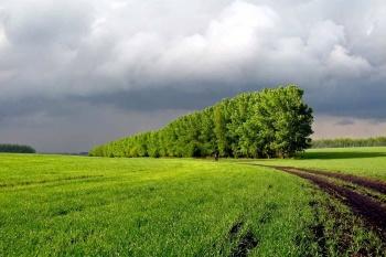 Правительство определило особенности использования, охраны, защиты и воспроизводства лесов на землях сельхозназначения