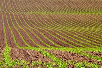 Правила продажи земельных участков сельскохозяйственного назначения