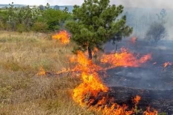 Министерство строительства и архитектуры Ульяновской области просит арендаторов земельных участков сельскохозяйственного назначения принять меры по недопущению природных пожаров