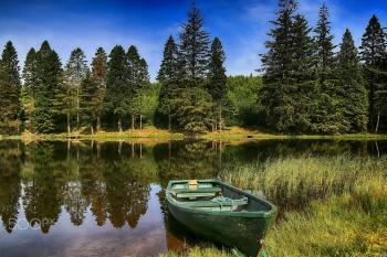 В ЛК РФ появилась статья об использовании лесов для целей рыболовства