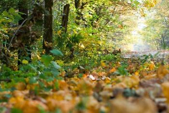 Правительство РФ уточнило некоторые вопросы рубки деревьев и кустарников.