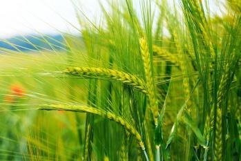 В Ульяновской области активно реализуются инвестиционные проекты в сфере развития сельского хозяйства