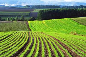 Предоставление земельных участков для сельскохозяйственного использования